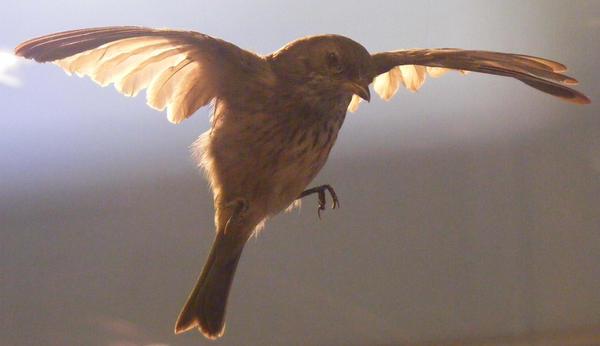 bird stock 105