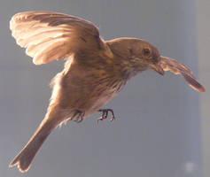 bird stock 107 by hatestock