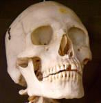 Skeleton Stock 30