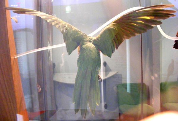 bird stock 137 by hatestock
