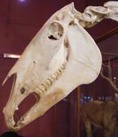 Skeleton Stock 33 by hatestock