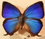 moths and butterflies stock130
