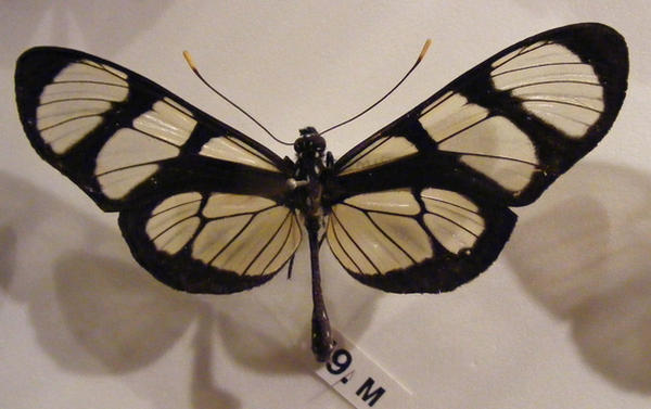 moths and butterflies stock134 by hatestock