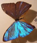 moths and butterflies stock136