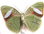 moths and butterflies stock137