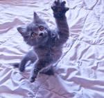Cat Stock 85