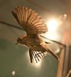 Bird Stock 25