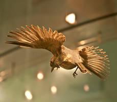 bird stock 29