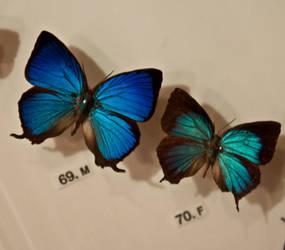 moths and butterflies stock142