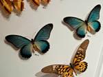 moths and butterflies stock145