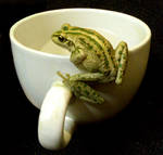frog stock