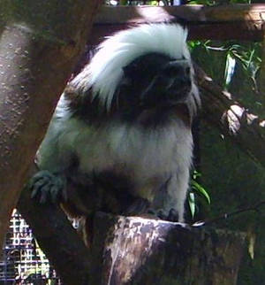 zoo stock primates 2