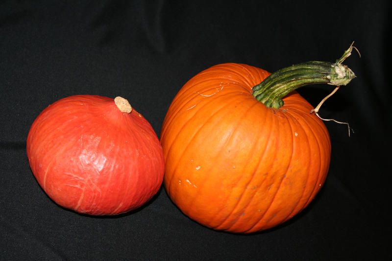 Two Pumpkins by CD-STOCK