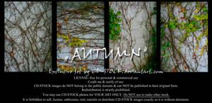 Autumn Exclusive Set