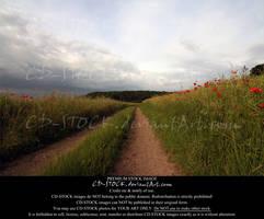 Poppy Path by CD-STOCK