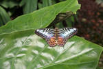 Butterfly 01 by CD-STOCK
