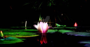 Bioluminescent Lily by CD-STOCK by CD-STOCK