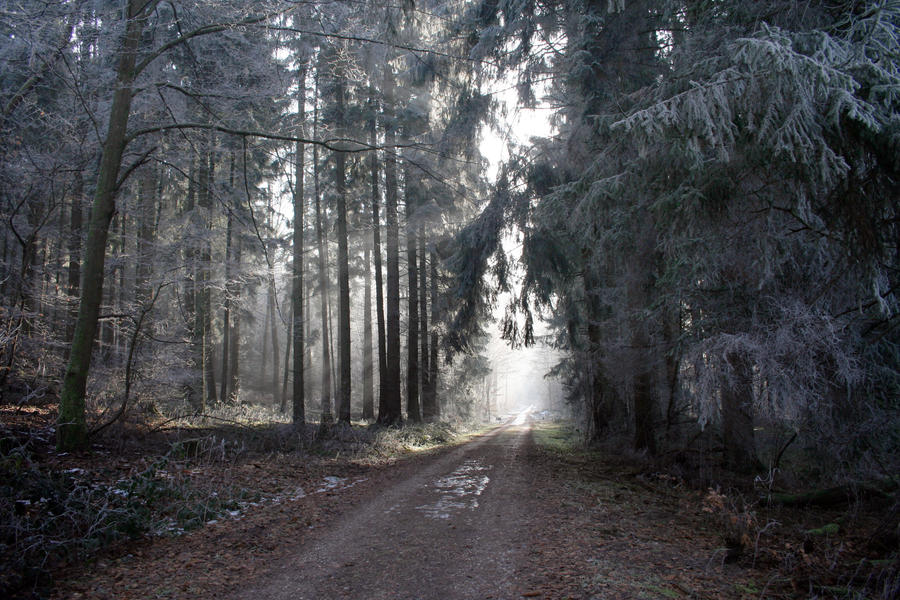 Winter Forest by CD-STOCK by CD-STOCK