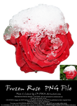 Frozen Rose PNG by CD-STOCK