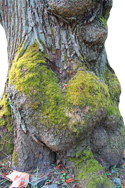 Heart Tree by CD-STOCK by CD-STOCK