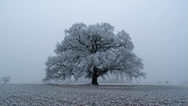Frozen Oak Premium CD-STOCK by CD-STOCK