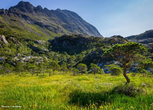 Bonsai Valley