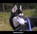 Husky - Rena - 05