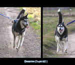 Husky - Rena - 09