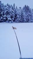 Husky - Zoey - 04