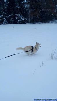 Husky - Zoey - 05