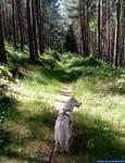 Husky - Zoey - 11