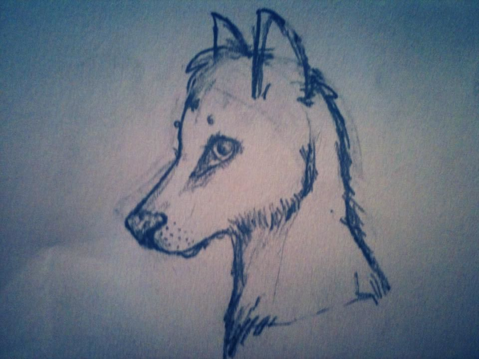 Get bored draw wolf by kadinskies on deviantart for What to doodle when your bored