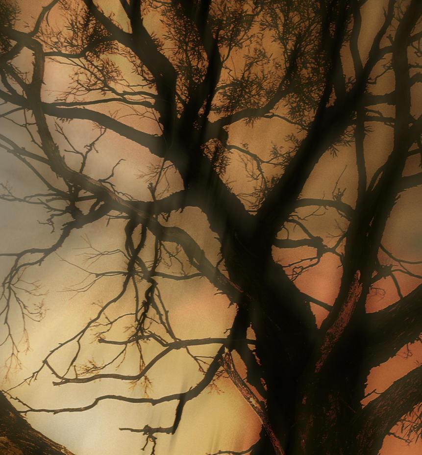 Halloween Under a Willow by Minerva01
