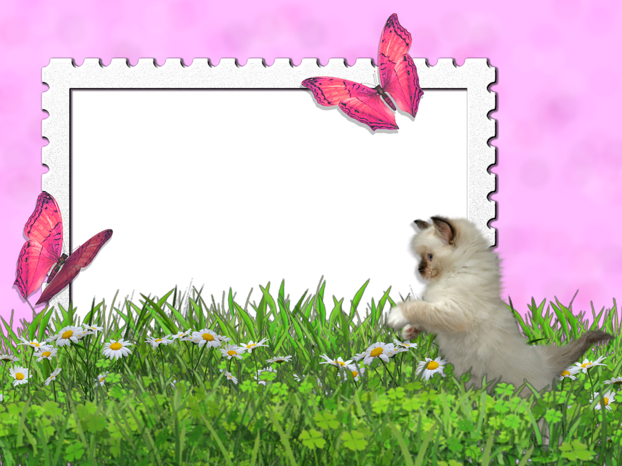 wallpaper of butterflies in 3d