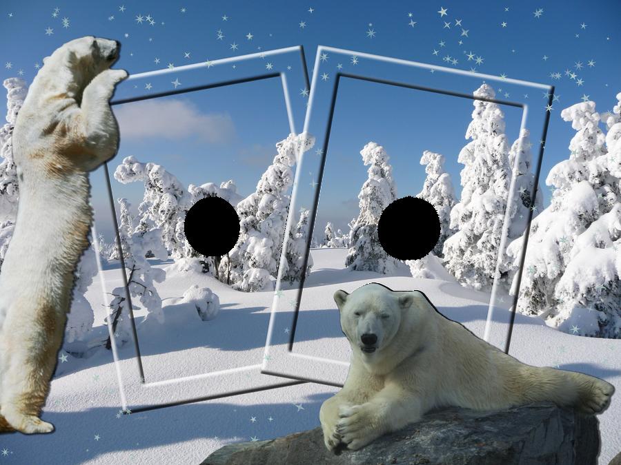 Polar Bear Frame by venicet on DeviantArt