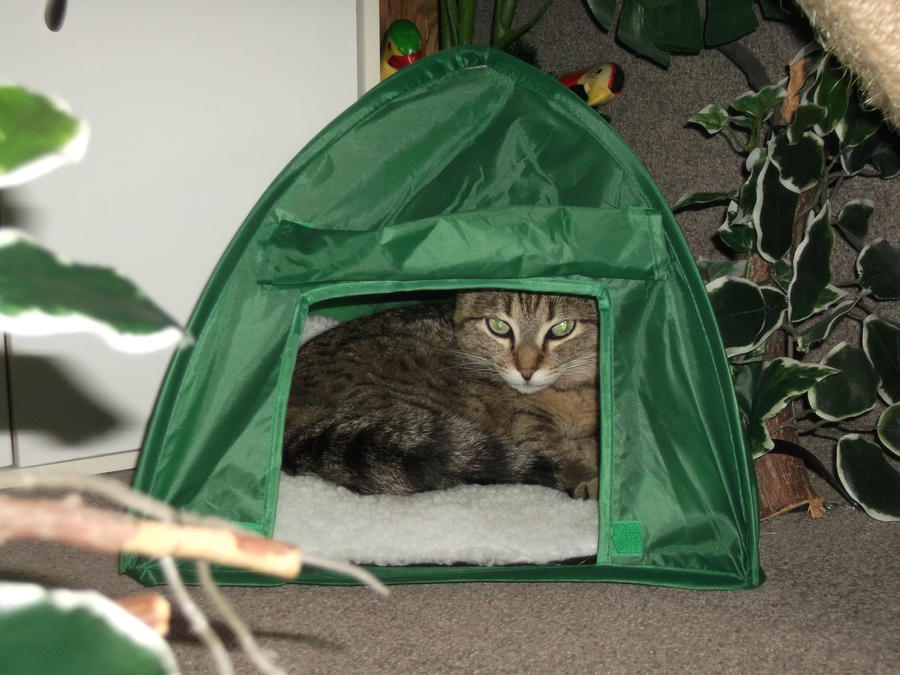 My tent by venicet