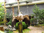 Griffon Vulture - Wings Stock