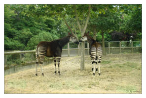 Striped couple by Arinnka