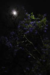La noche 4