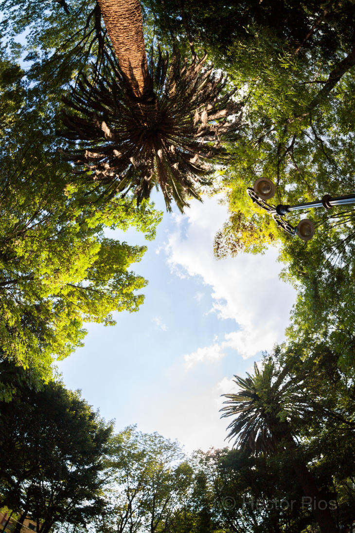 Coyoacan to the sky by Padx