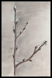 frost on a willow branch by dieroteiris