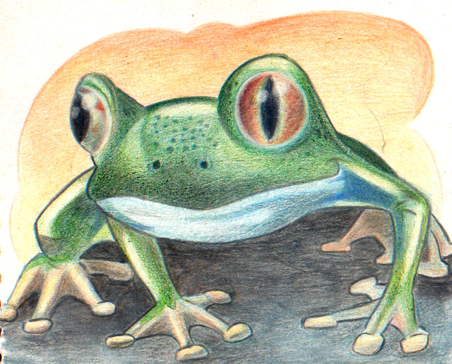 frog1 by Marcelo-Ilustra