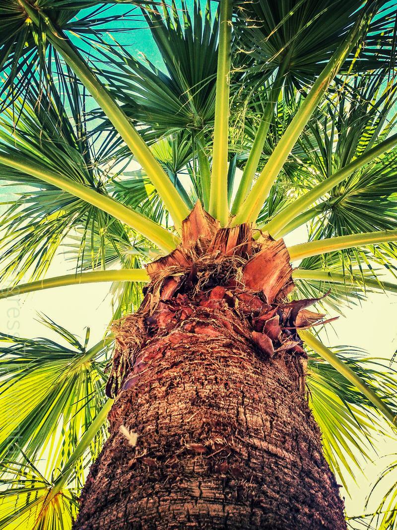Tropical Feel by EbonyTigress7