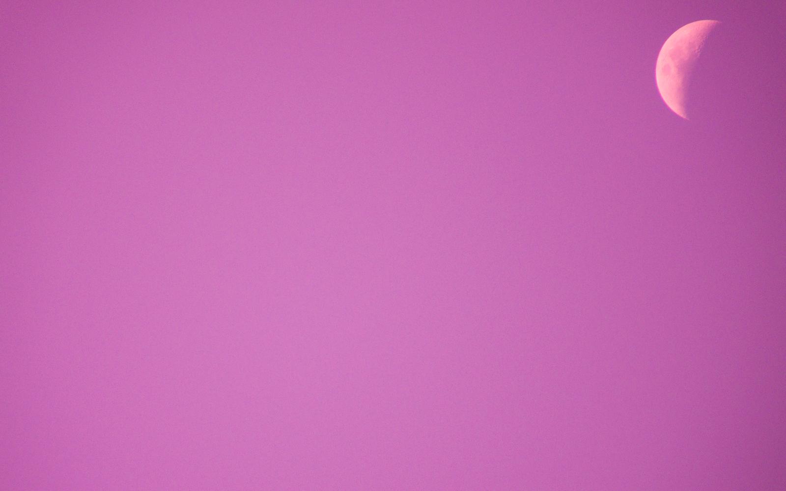 pink wallpaper web baby pink wallpapers