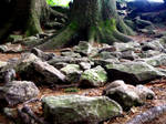 Stones and roots