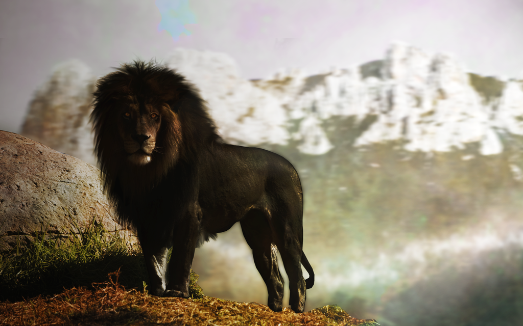 Black Lion By Pavoldvorsky On Deviantart
