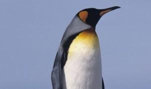 FreshPenguin's Profile Picture