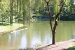 Lake and Willow Tree
