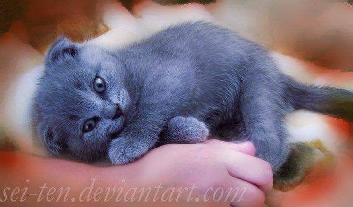 Blue cat by Sei-10