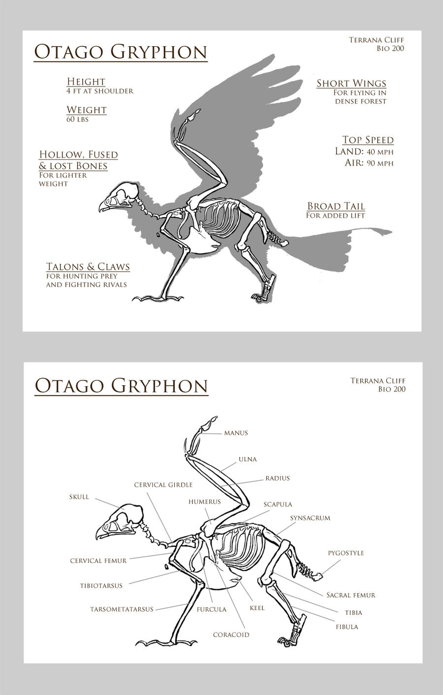 Otago Gryphon by rillani
